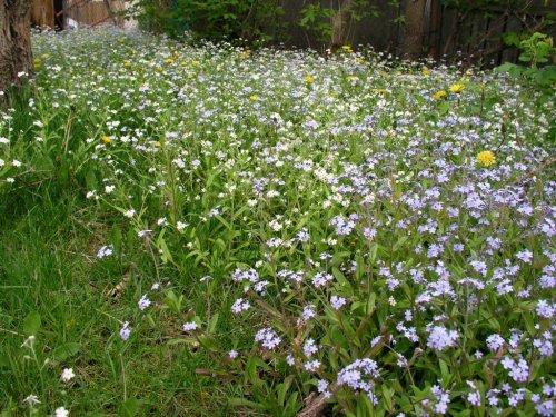 fleur champs gabriel